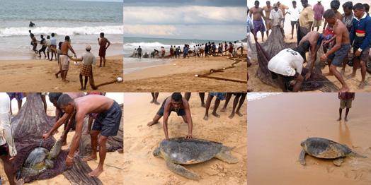 Шри-Ланка, 2004 год